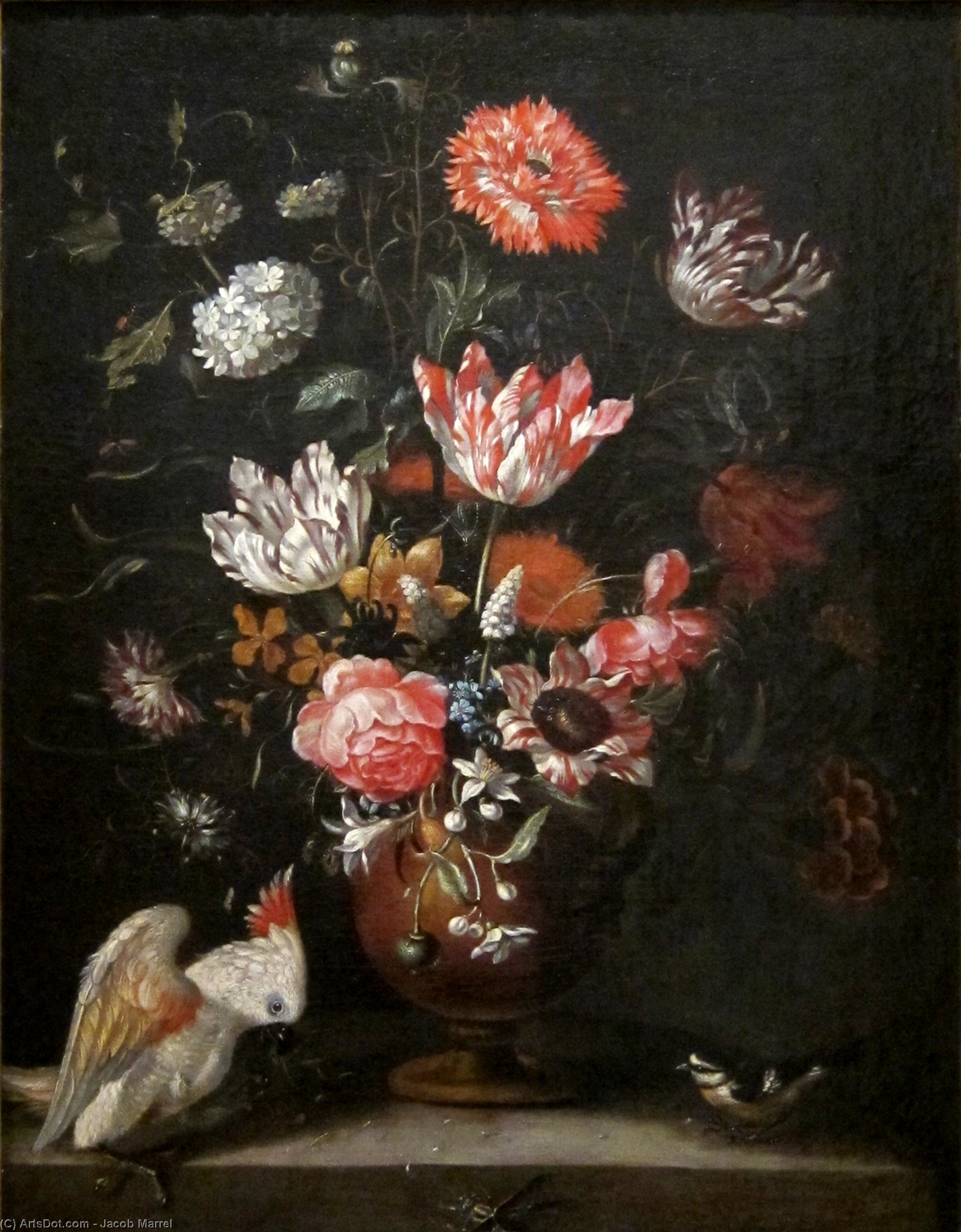 fiori pappagallo  e le  tetta  di Jacob Marrel (1614-1681, Germany) | ArtsDot.com