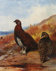 Archibald Thorburn - un paio di rosso grouse al Water-s Limite , in moorland