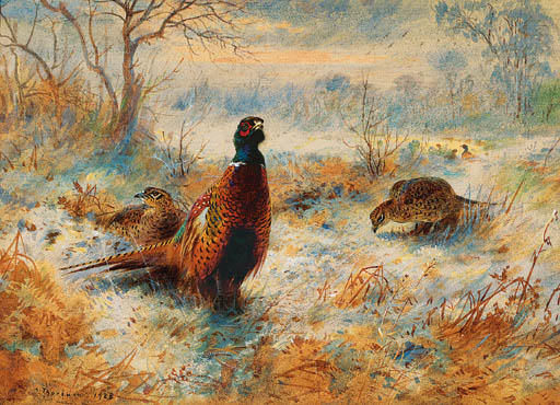 gelo all alba . fagiano tra bracken, acquerello di Archibald Thorburn (1860-1935, United Kingdom)