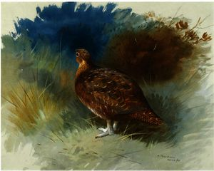 Archibald Thorburn - Grouse 1