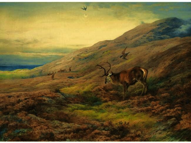 nelle highlands , red stag assalito da una coppia di pellegrini, acquerello di Archibald Thorburn (1860-1935, United Kingdom)