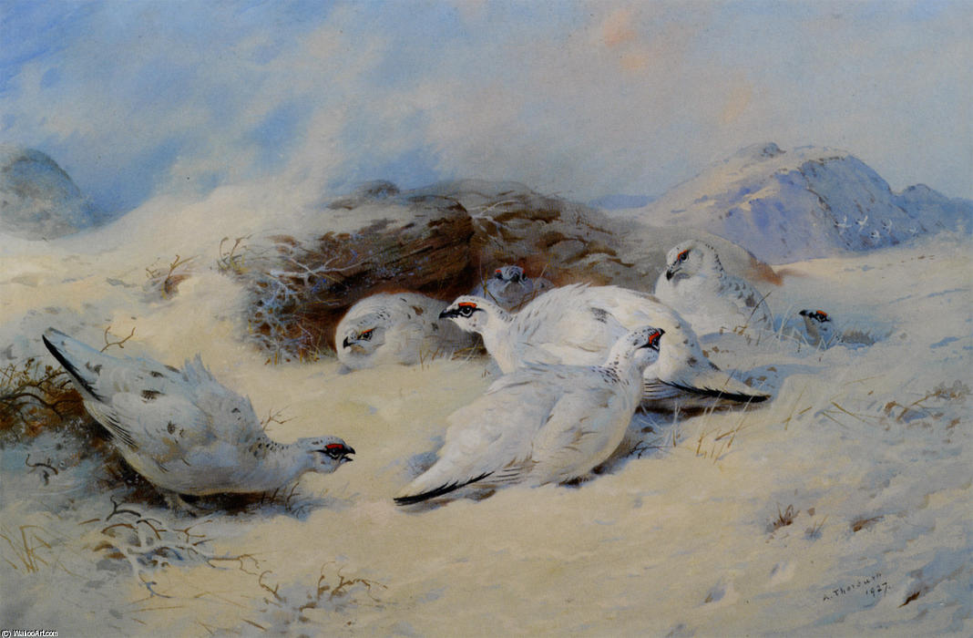 Ptarmigan Shelter Cerco, acquerello di Archibald Thorburn (1860-1935, United Kingdom)
