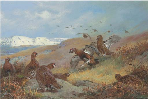 Red Grouse Il Moorland di Archibald Thorburn (1860-1935, United Kingdom) | ArtsDot.com