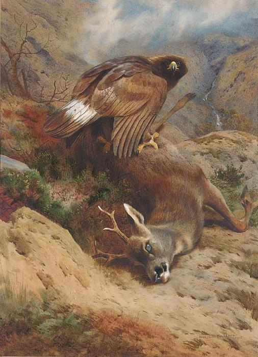 The Lost Roe, acquerello di Archibald Thorburn (1860-1935, United Kingdom)