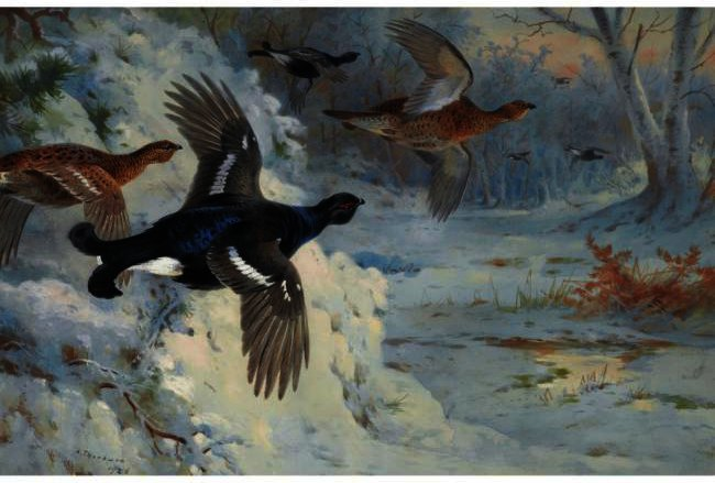 Through The Snowy ripari-BlackGame, acquerello di Archibald Thorburn (1860-1935, United Kingdom)