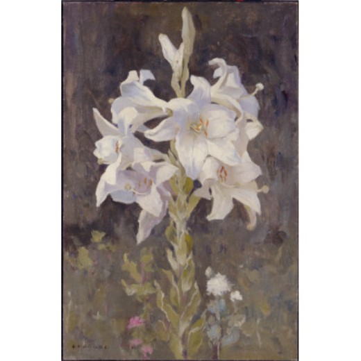 Lillies, disegno di Eanger Irving Couse (1866-1936, United States)