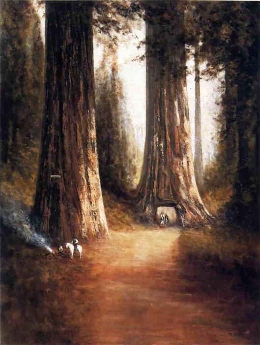 Sequoia Gigantea, olio su tela di Thomas Hill (1829-1908, United Kingdom)