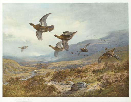 Gallo cedrone, acquerello di Archibald Thorburn (1860-1935, United Kingdom)