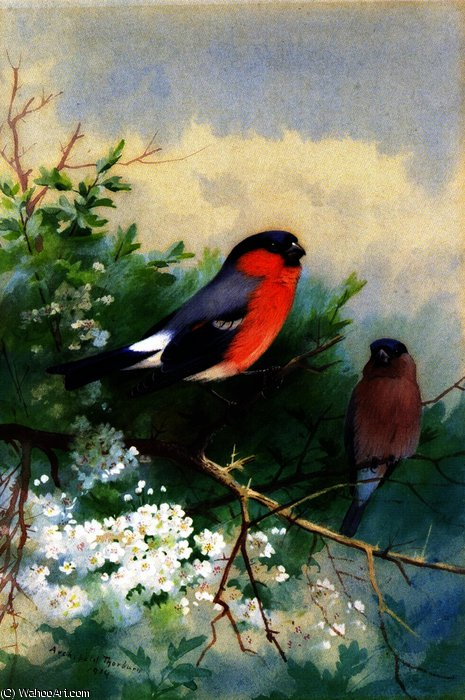 Un paio di Bullfinches, acquerello di Archibald Thorburn (1860-1935, United Kingdom)