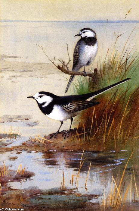 Un paio di Pied Wagtails, acquerello di Archibald Thorburn (1860-1935, United Kingdom)