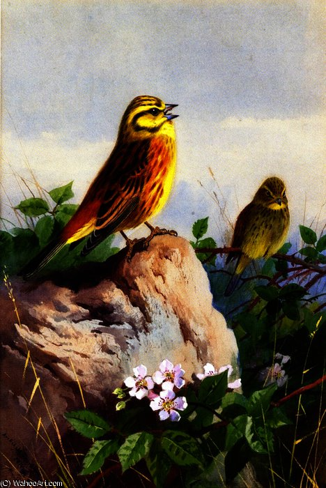Un paio di yellowhammers, acquerello di Archibald Thorburn (1860-1935, United Kingdom)