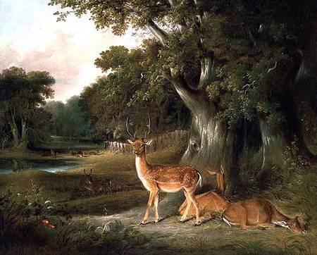 cervo in Un  boscoso  paesaggio  di Thomas And William Daniell (1769-1837, United Kingdom)
