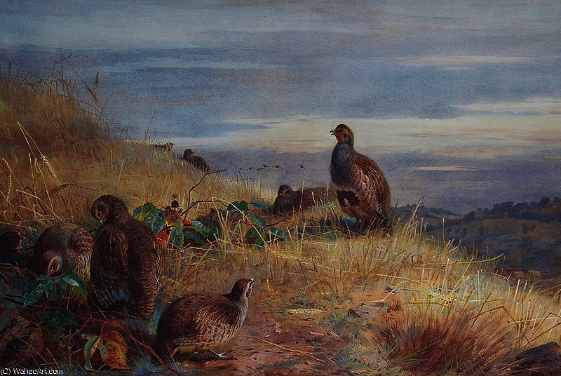Il Covey a Daybreak di Archibald Thorburn (1860-1935, United Kingdom)