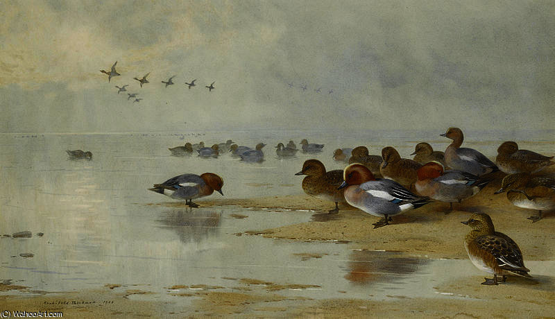 Fischione e Teal dal bordo dell acqua di Archibald Thorburn (1860-1935, United Kingdom)