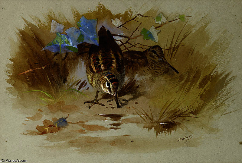 Woodcock in una conca di sabbia di Archibald Thorburn (1860-1935, United Kingdom)