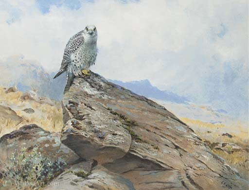 Gyr falco su uno sperone roccioso di George Edward Lodge (1860-1954, United Kingdom)