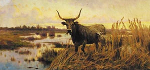 Aurelio Tiratelli - Water Buffalo nella campa..