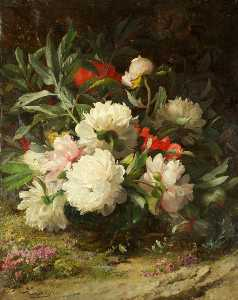 William Jabez Muckley - Peonie